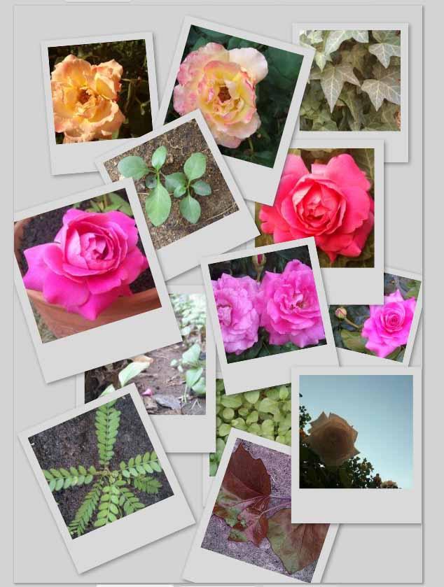 Crea un collage de tus fotografías desde Picasa | Tecnología ...