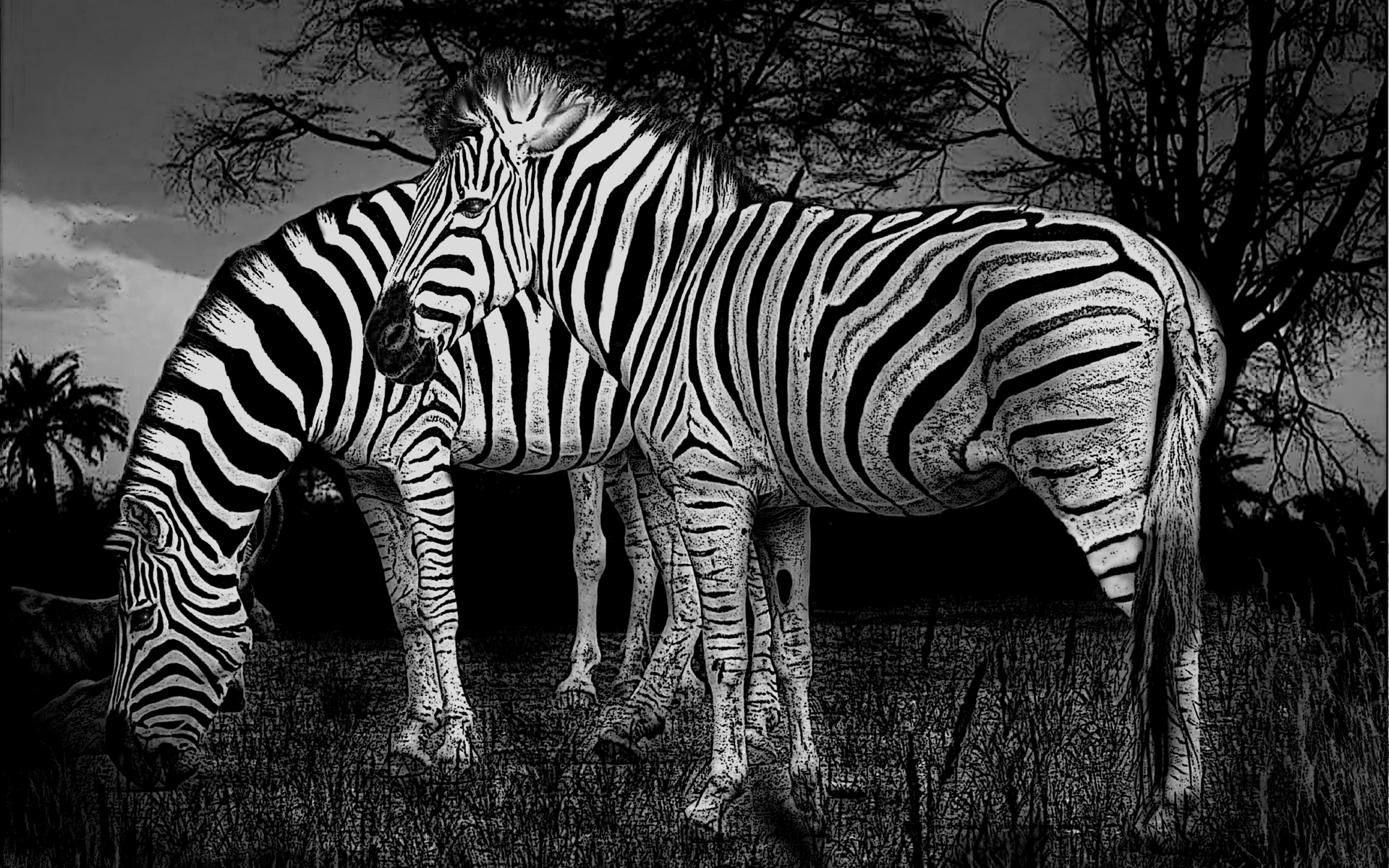 Los 29 Mejores Wallpapers O Fondos De Pantalla De Animales