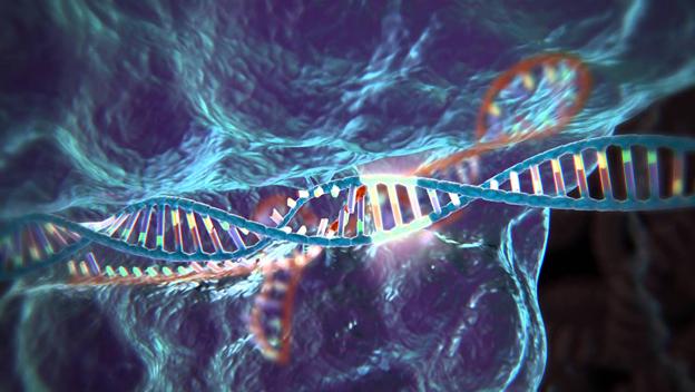 Luz verde a una herramienta de edición genética para humanos