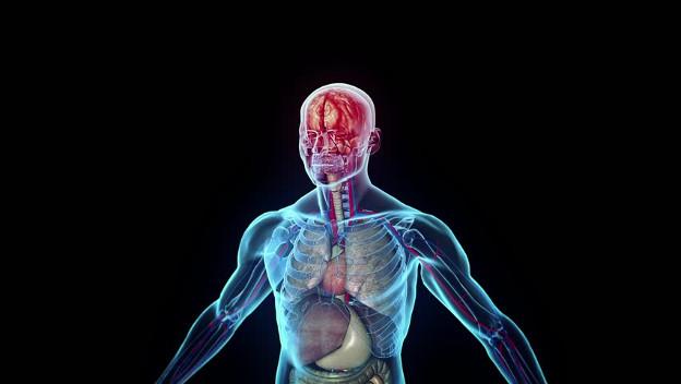 Desarrollan un sistema GPS que rastrea dentro del cuerpo humano