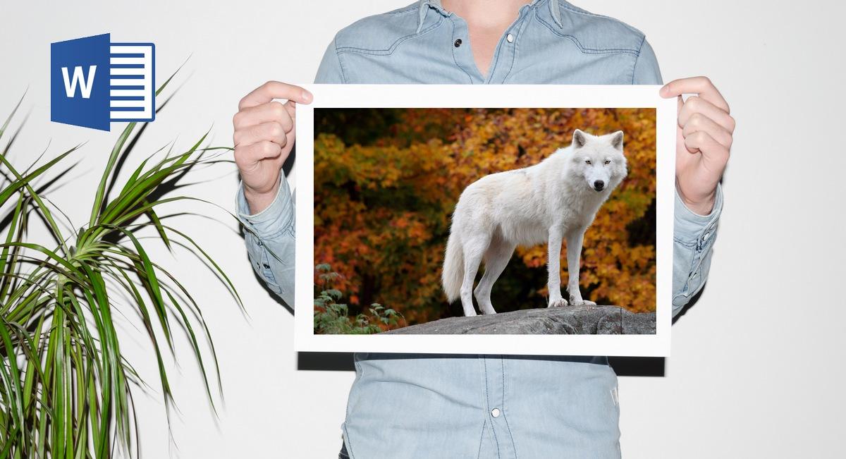 Cómo imprimir una imagen en cuatro hojas en Word