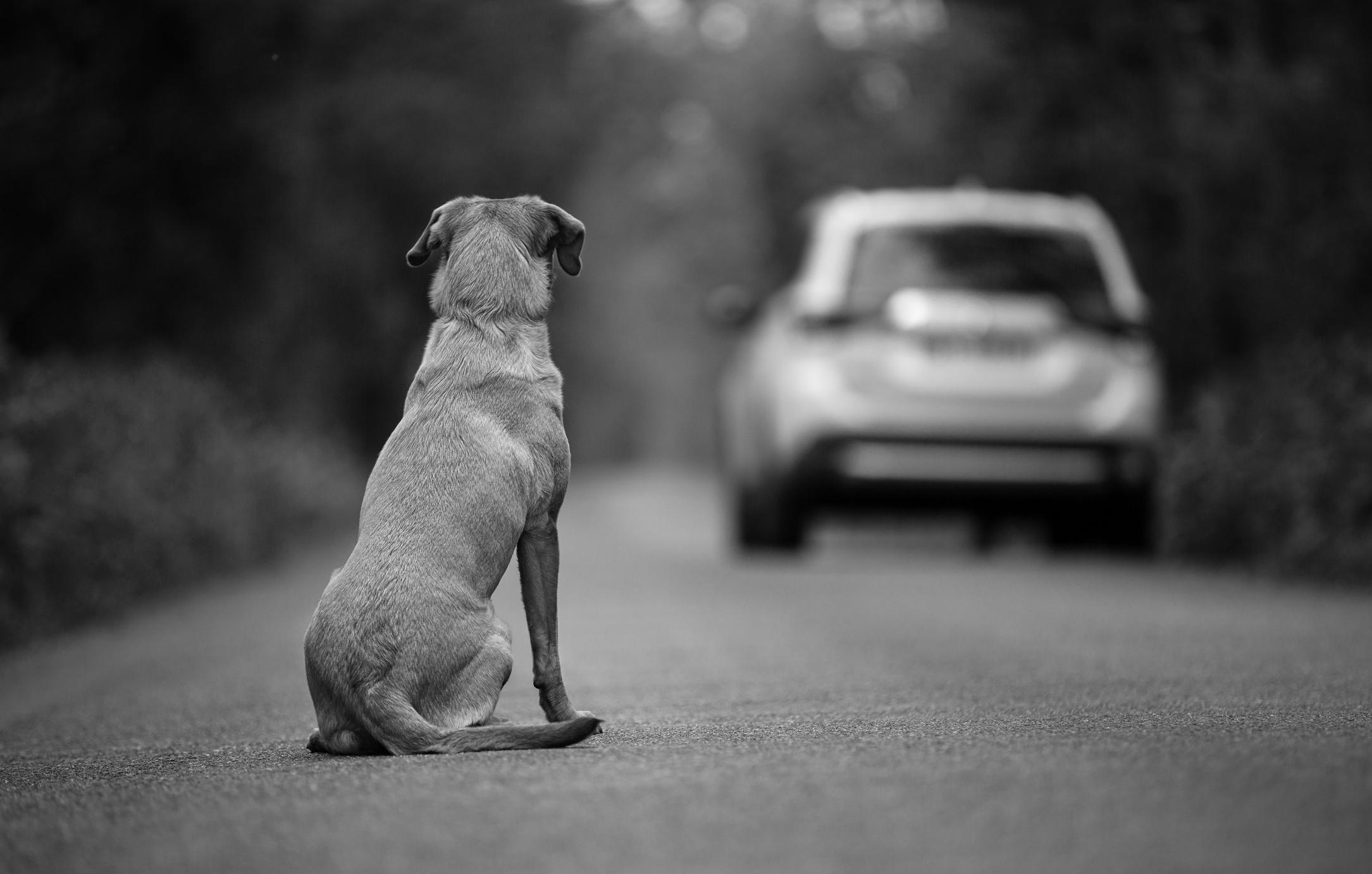 Cuidado, estas son las seis carreteras con más perros abandonados