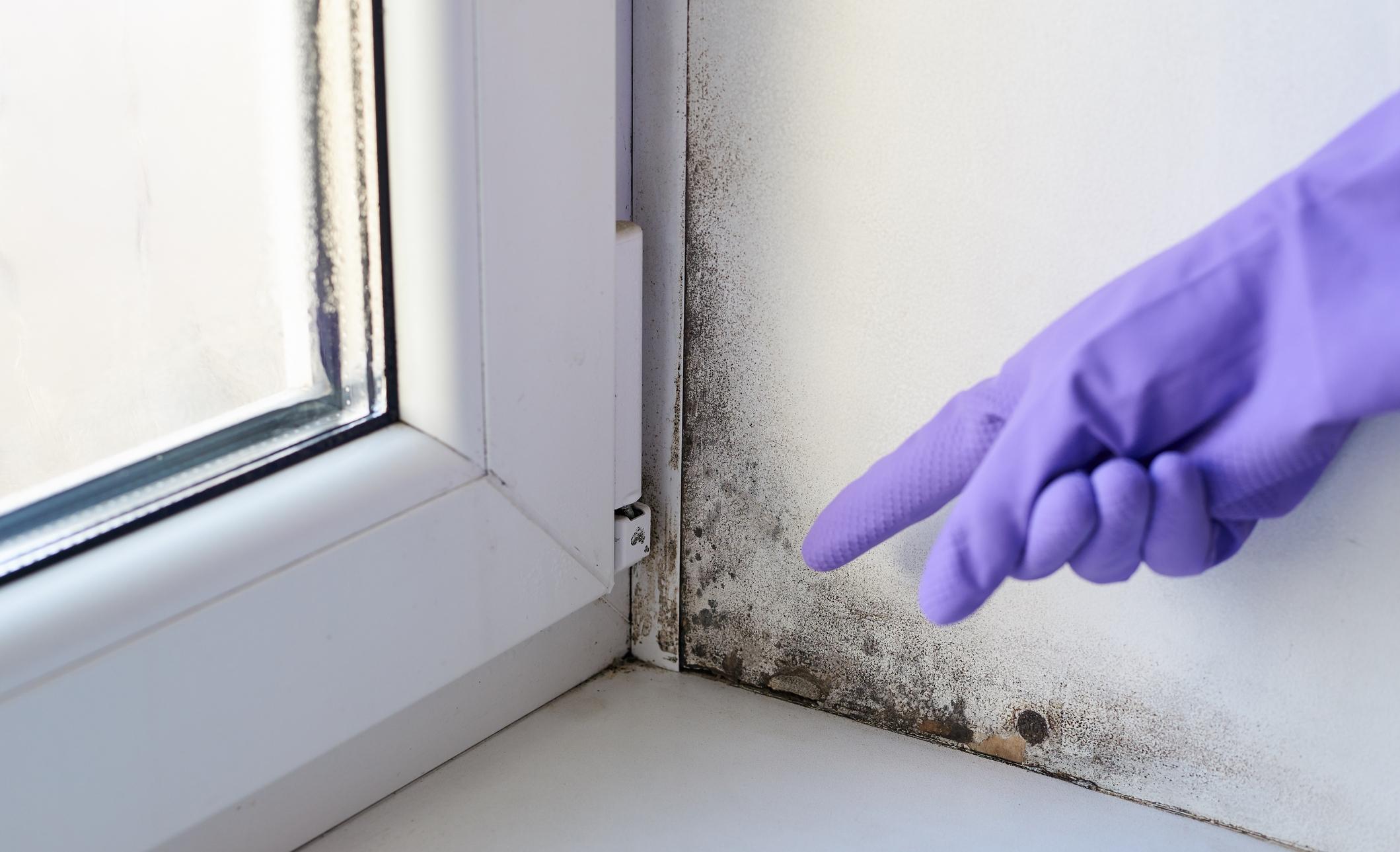 Cómo eliminar el moho y las humedades para siempre en casa   Life -  ComputerHoy.com