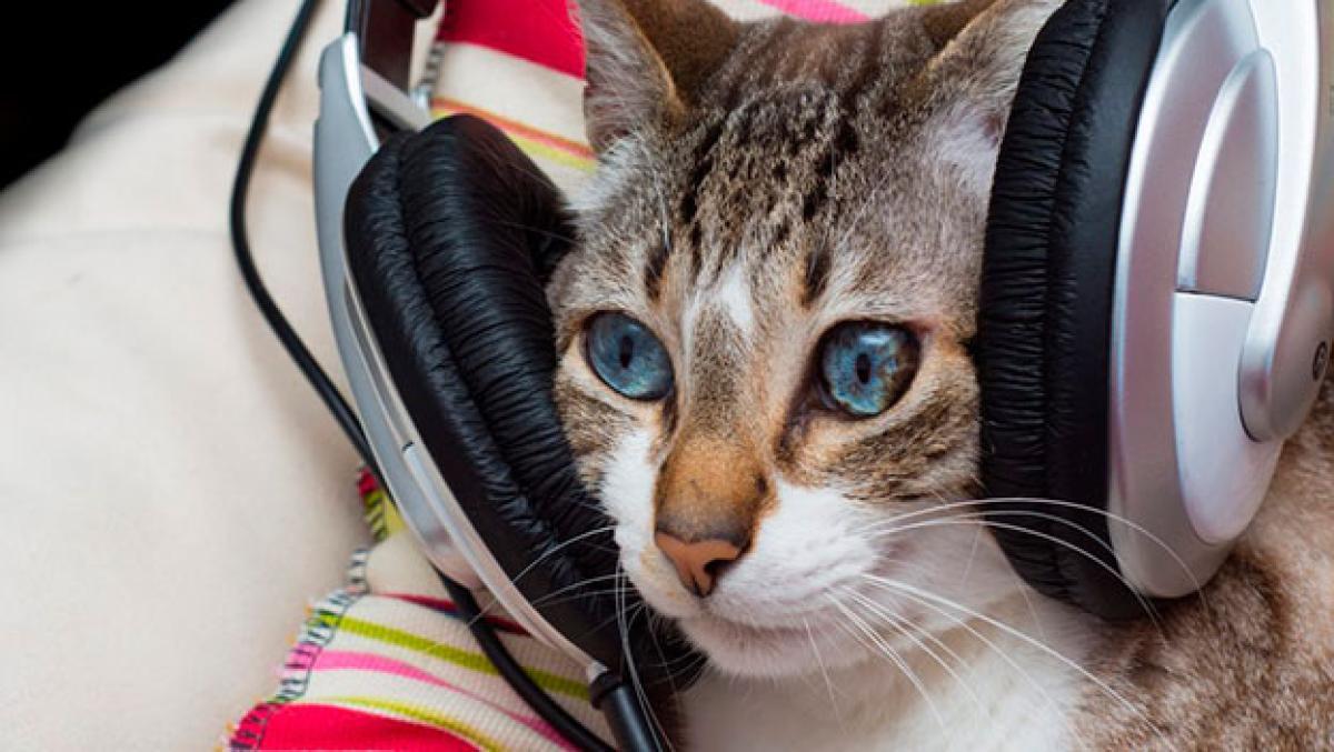 Esta es la música perfecta para tu gato, según la ciencia | Life -  ComputerHoy.com