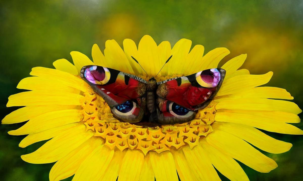 Ilusiones-opticas-johannes-stotter-no-mariposa-1925049