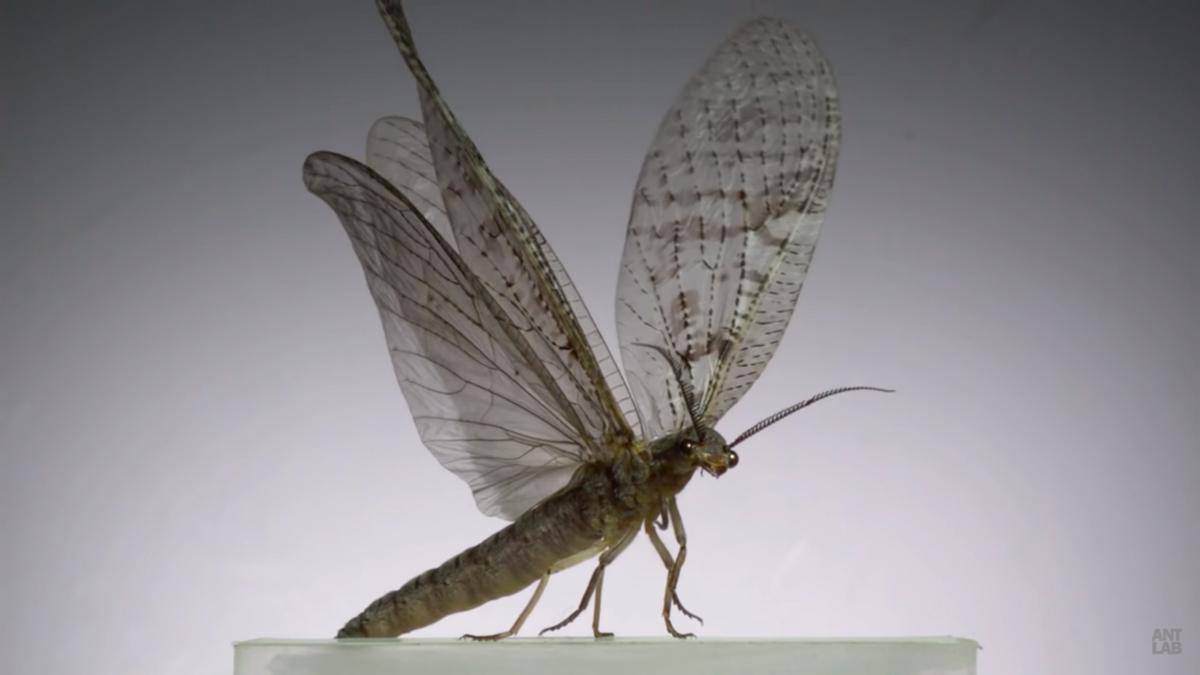 Este vídeo de insectos volando a 3.200 fps con cámara super lenta es lo más impresionante que verás hoy