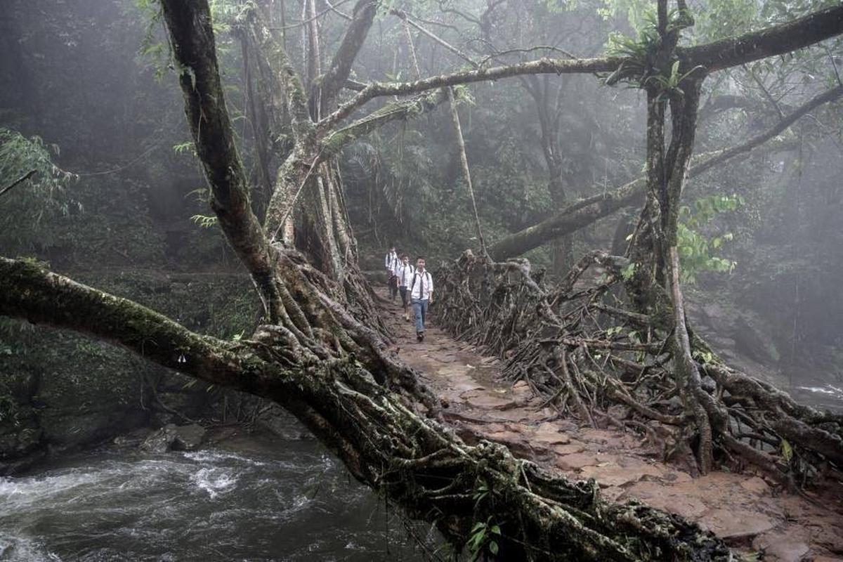 Tribu-india-construye-puentes-vivientes-tardan-30-anos-llegar-otra-orilla-pero-viven-500-anos-2198379