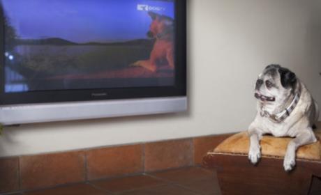 DOGTV, el canal televisivo para perros