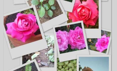 Picasa Collage