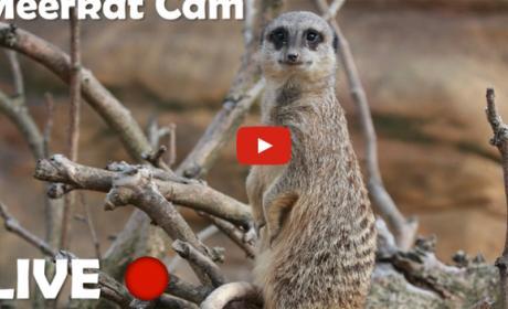 Youtube emite en streaming a los animales del Zoo de Londres