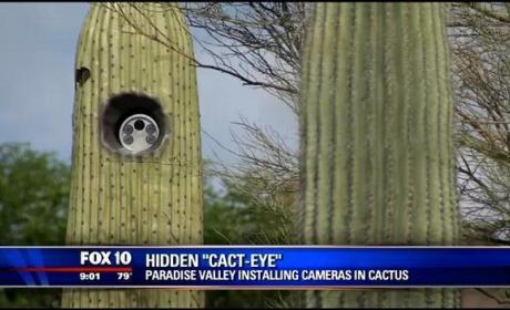 Llegan las Cactus cam, cámaras de tráfico escondidas en cactus.