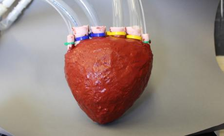 Crean nuevo material para prótesis y órganos artificiales