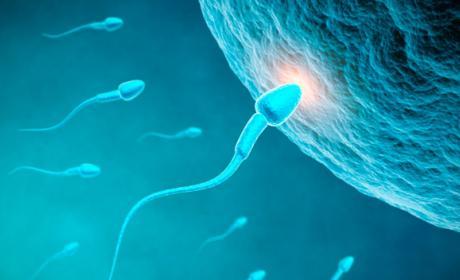 Spermbot nanorrobot, nanorrobot fecundacion, solucion infertilidad