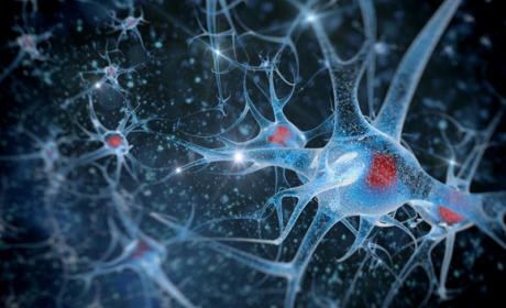 Científicos descubren cómo borrar y manipular recuerdos