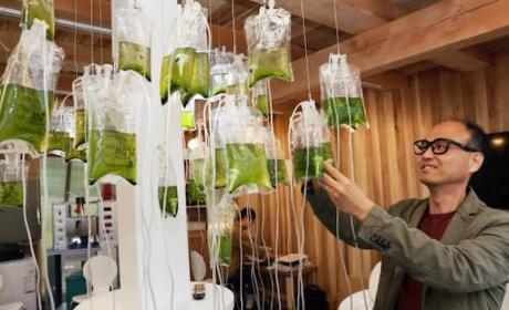 Sistema convierte heces en biocombustible