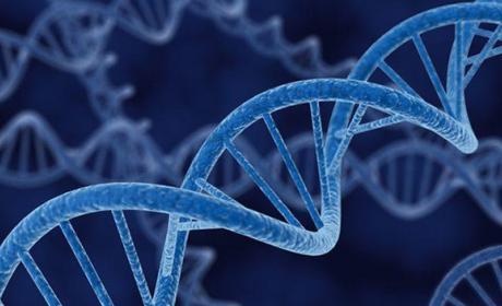 Un grupo de científicos creará genoma humano sintético