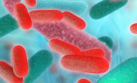 pila combustible bacterias