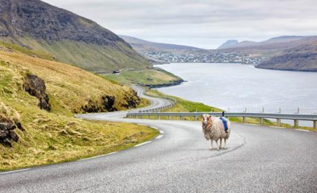 A falta de Google, isleños mapean el país con la ayuda de ovejas