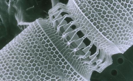 Las nanopartículas aumentan la eficacia de los medicamentos
