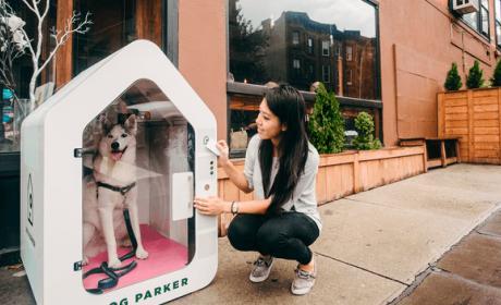 Dog Parker