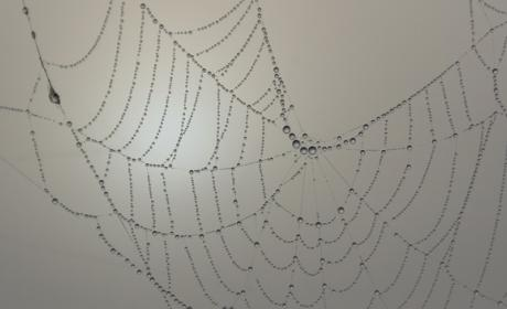 Científicos han creado una seda de araña artificial
