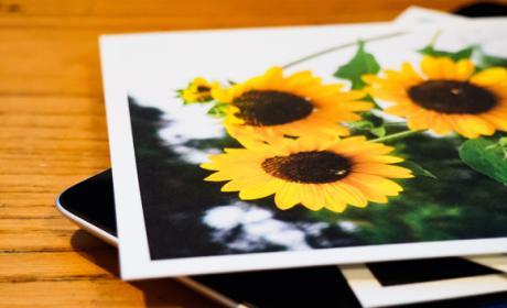 Buscador de fotografías gratis