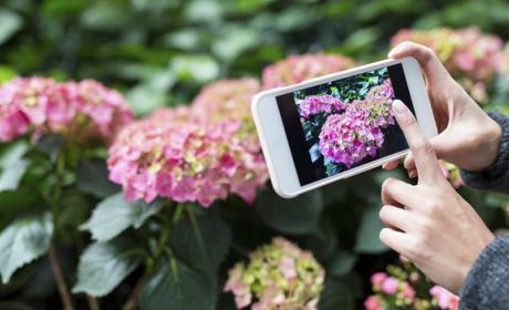 PlantNet, el Shazam de las plantas
