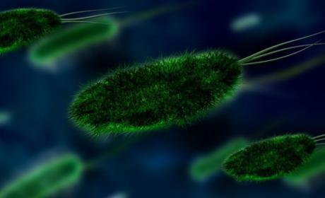 Hackear Bacterias para curar cáncer