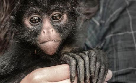 extincion animales vertebrados