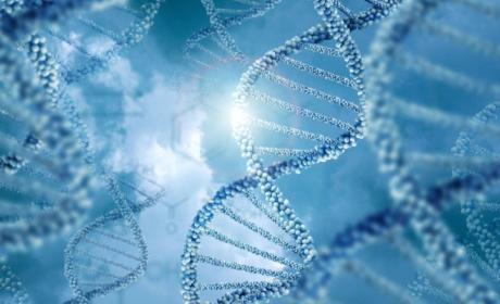 Científicos descubren una forma de parar el envejecimiento en células humanas