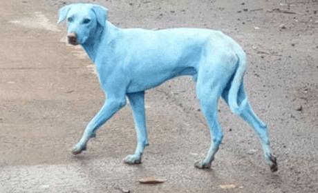 Consecuencias contaminación perros azules