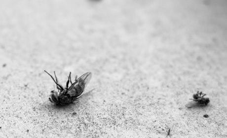 Moscas, garrapatas y otros parásitos podrían desaparecer por el cambio climático.