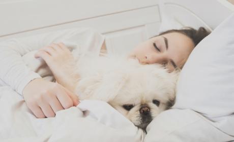 ¿Es malo compartir cama con tu perro?