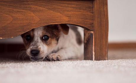 Perros en peligro por huesos golosina