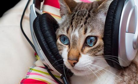 música para gatos