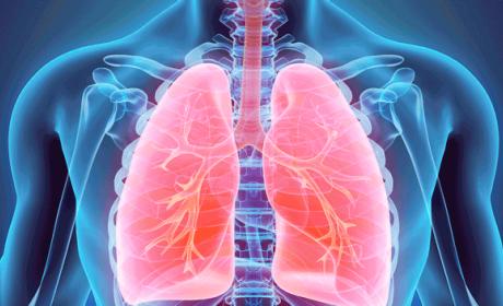 Verdades y mentiras del nuevo órgano del cuerpo descubierto