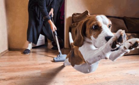 Mejores trucos para tener la casa limpiar teniendo mascotas
