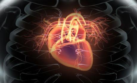 rejuvenecer corazon