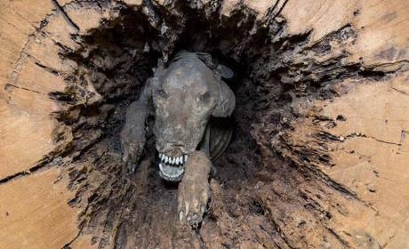 Stickie, el perro momia