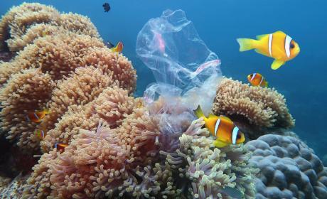 Plástico mar