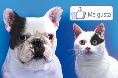 Heepees,  la nueva red social para mascotas y mascoteros