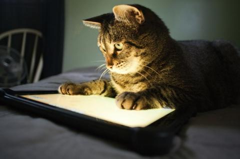 Las 5 mejores apps de iOS sobre gatos