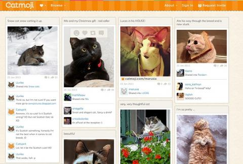 Catmoji es una red social exclusiva para gatos.