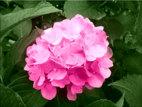 Imagen coloreada