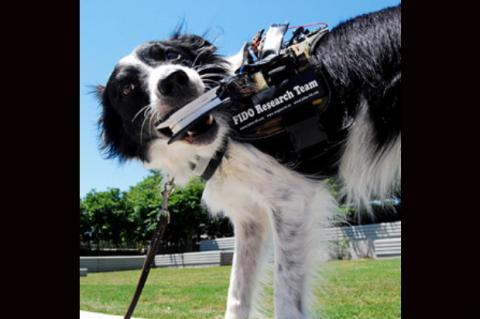 Prototipo de Google Glass para perros