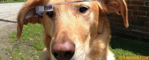 google glass perros