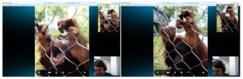 Orangutanes Skype