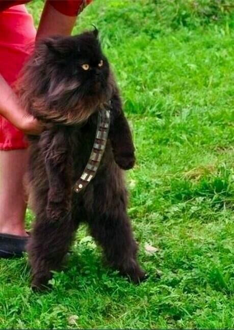 Mewbacca, fotos star wars twitter
