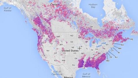 mapa deforestacion de Google