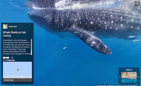 Google añade vistas de oceanos a los mapas de Street view